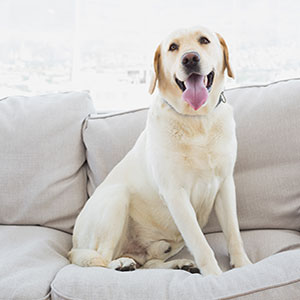 Pet-Friendly Apartments in Apex, NC | Bell Apex